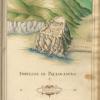 Bartolomeo degli Oddi, Fortezza di Paleocastro